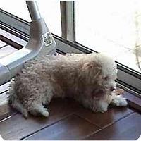 Adopt A Pet :: Julius - La Costa, CA