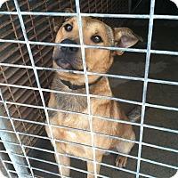 Adopt A Pet :: COWBOY - Childress, TX