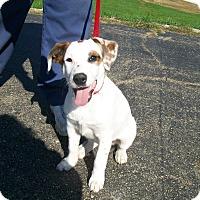 Adopt A Pet :: Tulip - Lancaster, OH