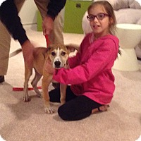 Adopt A Pet :: Trace - LOVES KIDS & DOGS - Randolph, NJ