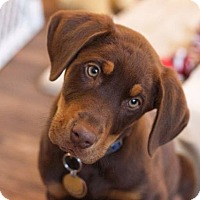 Adopt A Pet :: Monte - Fort Worth, TX
