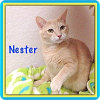 Adopt A Pet :: Nester - Foothill Ranch, CA