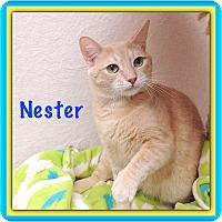 Adopt A Pet :: Nester - Foothill Ranch, CA