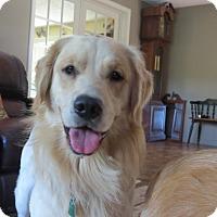 Adopt A Pet :: Tonka - New Canaan, CT