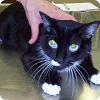 Adopt A Pet :: Zia - Sterling, KS