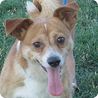 Adopt A Pet :: Rex - Turlock, CA