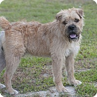 Shaggy Dog Rescue Allentown Pa