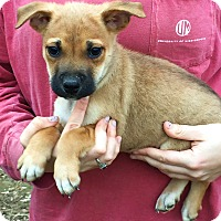 Adopt A Pet :: Colvin - Stamford, CT