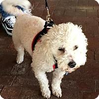 Adopt A Pet :: Bubba - Costa Mesa, CA