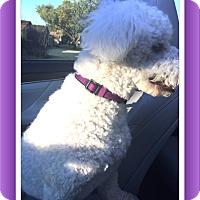 Adopt A Pet :: Adopted!!Alfie - TX - Tulsa, OK