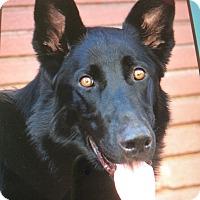 Adopt A Pet :: ARIES VON ARCHIMBALD - Los Angeles, CA
