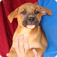 Adopt A Pet :: Cassie - Oviedo, FL