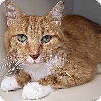 Adopt A Pet :: Las Vegas - Chicago, IL
