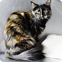 Adopt A Pet :: Midna - San Jacinto, CA