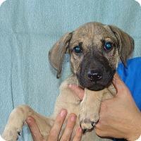 Adopt A Pet :: Tag - Oviedo, FL