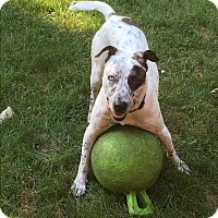 Adopt A Pet :: Phantom - St. Charles, IL