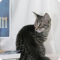 Adopt A Pet :: Rosalind Franklin - New City, NY