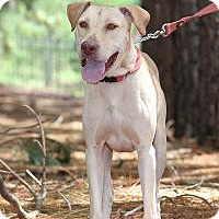 Adopt A Pet :: Walter D (Wally) - Minneola, FL