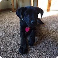Adopt A Pet :: Seth - Maple Grove, MN