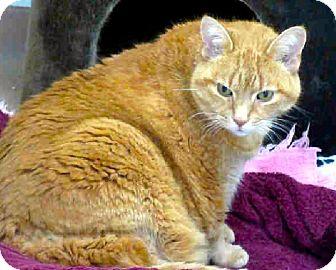 Domestic Shorthair Cat for adoption in Toronto, Ontario - Bessie