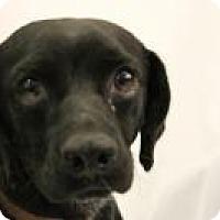 Adopt A Pet :: Ramsey - Huachuca City, AZ