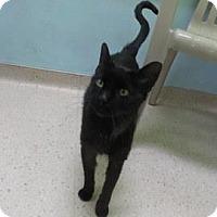Adopt A Pet :: Grady - Janesville, WI