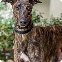 Adopt A Pet :: Twitch - Walnut Creek, CA