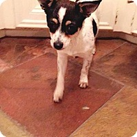 Adopt A Pet :: Nina - Lake Jackson, TX