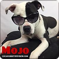 Adopt A Pet :: Mojo - Toledo, OH
