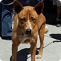 Adopt A Pet :: Diamond - Fowler, CA