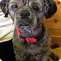 Adopt A Pet :: Mulligan - Toronto, ON