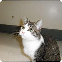 Adopt A Pet :: Pepper - Milwaukee, WI