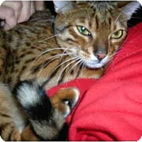 Adopt A Pet :: Asia - Riverside, RI