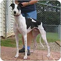 Adopt A Pet :: Casper - Oak Ridge, NC