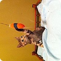 Adopt A Pet :: Dora - Simpsonville, SC
