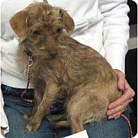 Adopt A Pet :: Coco - Conroe, TX
