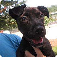 Adopt A Pet :: Ninja - Gadsden, AL