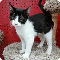 Adopt A Pet :: Luna - Phoenix, AZ