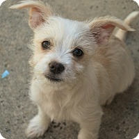 Adopt A Pet :: Terra - Long Beach, CA