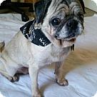 Adopt A Pet :: Tootsie