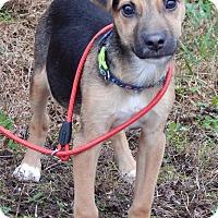 Adopt A Pet :: Jack(8 lb) BIG Personality! - SUSSEX, NJ