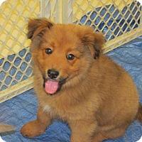 Adopt A Pet :: Jalen - Rocky Mount, NC