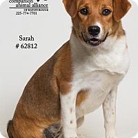 Adopt A Pet :: Sarah (Foster) - Baton Rouge, LA