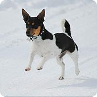 Adopt A Pet :: Murphy-Adoption pending - Bridgeton, MO