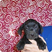 Adopt A Pet :: Lizzie - Oviedo, FL