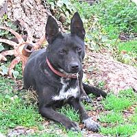 Adopt A Pet :: DAISY - Bedminster, NJ