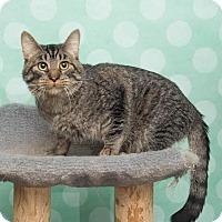 Adopt A Pet :: Tobie - Chippewa Falls, WI