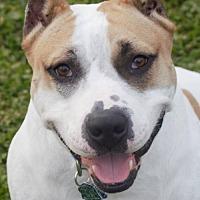 Adopt A Pet :: Titus - Abbeville, LA