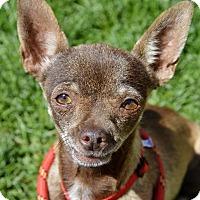 Adopt A Pet :: Lady - Meridian, ID