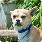 Adopt A Pet :: Stitch $125